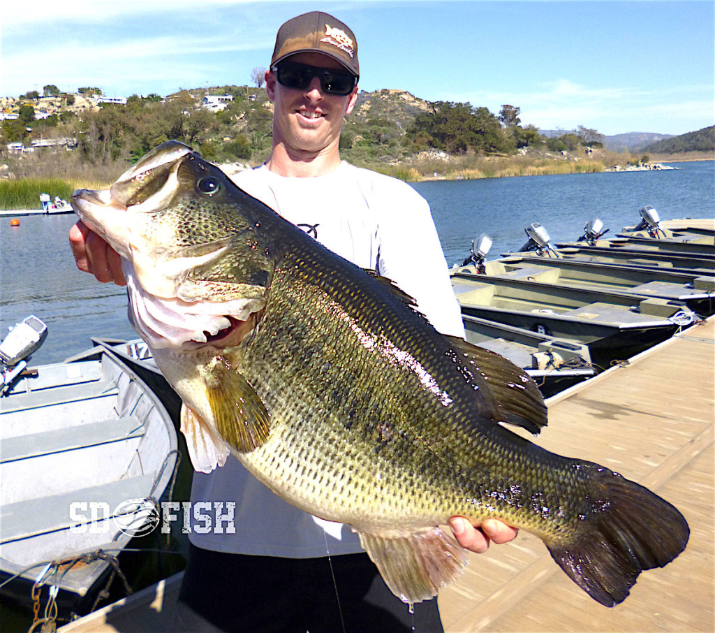 Monster alert 16 3 pound bass caught at lake wohlford for Bass fishing lakes near me